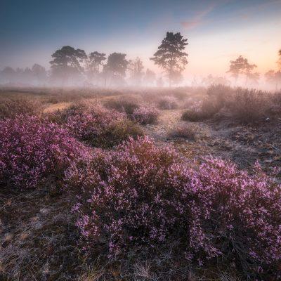 Kalmthoutse Heide - België - © Dion van den Boom - Fotografie