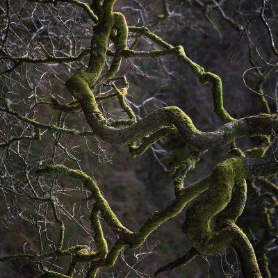 Stirling District - Schotland - © Dion van den Boom - Fotografie