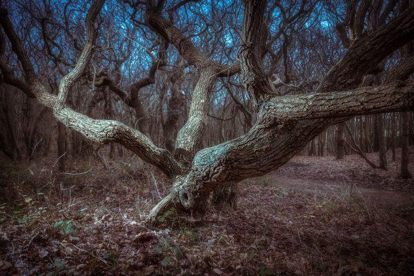 Fotokalender Woodlands & Trees - Januari - © Dion van den Boom - Fotografie - Alle rechten voorbehouden.