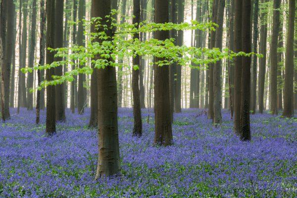 Fotokalender Woodlands & Trees - April - © Dion van den Boom - Fotografie - Alle rechten voorbehouden.