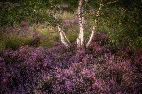 Fotokalender Woodlands & Trees - Augustus - © Dion van den Boom - Fotografie - Alle rechten voorbehouden.