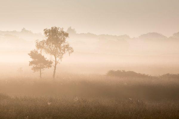 Fotokalender Woodlands & Trees - September - © Dion van den Boom - Fotografie - Alle rechten voorbehouden.