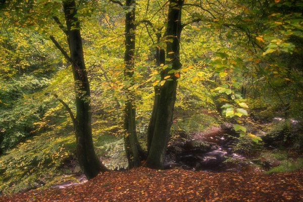 Fotokalender Woodlands & Trees - Oktober - © Dion van den Boom - Fotografie - Alle rechten voorbehouden.
