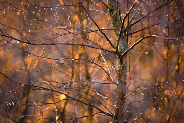 Fotokalender Woodlands & Trees - November - © Dion van den Boom - Fotografie - Alle rechten voorbehouden.