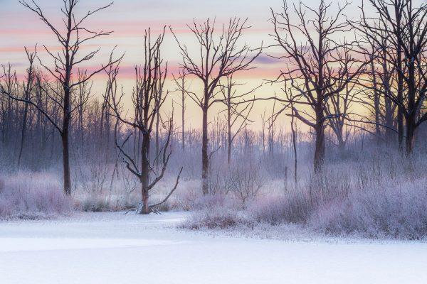 Fotokalender Woodlands & Trees - December - © Dion van den Boom - Fotografie - Alle rechten voorbehouden.