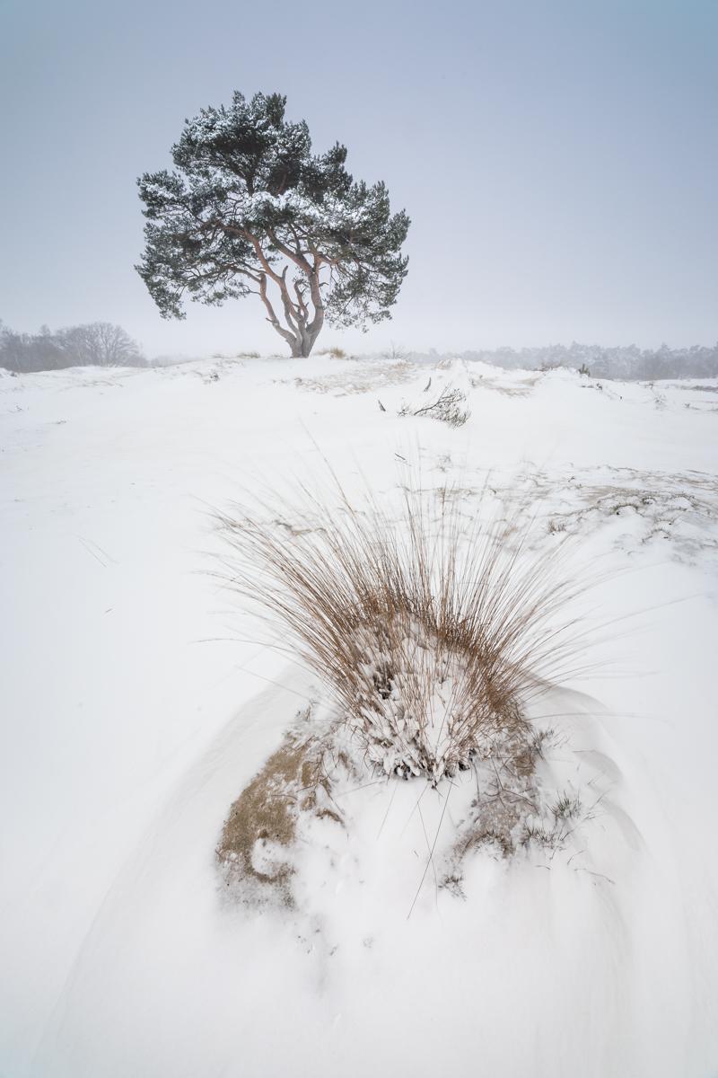 Loonse en Drunense Duinen - © Dion van den Boom. Alle rechten voorbehouden.