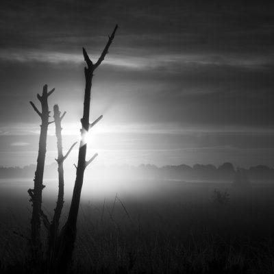 Kalmthoutse Heide - © Dion van den Boom - Fotografie